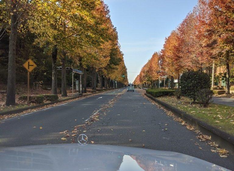 つくばの紅葉に染まる街路樹並木